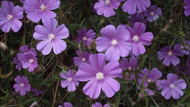 Wild Flower Wallpaper screenshot 2