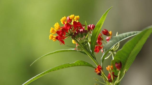 Wild Flower Wallpaper screenshot 4