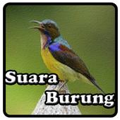 Kicau Kolibri icon