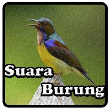 Kicau Kolibri poster
