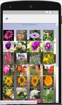 Flores silvestres para el amor screenshot 1