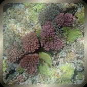 Underwater LWP Free icon