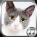 Cat Ringtone Sounds