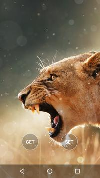 Animals Wallpapers HD poster