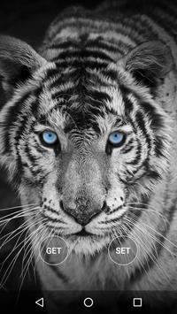 Animals Wallpapers HD apk screenshot