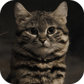 Cat Wallpapers Free HD icon