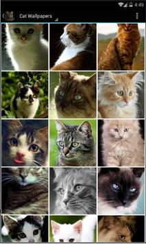 Cat Wallpapers Free HD poster