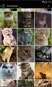 Cat Wallpapers Free HD apk screenshot
