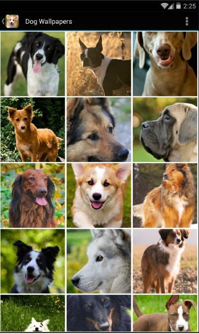 Dog Wallpapers Free Hd For Android Apk Download