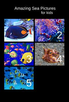 Amazing Sea Pictures For Kids poster