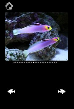 Amazing Sea Pictures For Kids screenshot 5