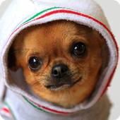 Cute Puppy Pictures For kids icon