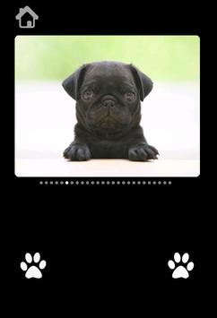 Cute Puppy Pictures For kids screenshot 1