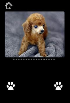 Cute Puppy Pictures For kids screenshot 2