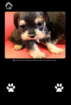 Cute Puppy Pictures For kids screenshot 3
