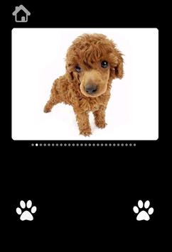 Cute Puppy Pictures For kids screenshot 4