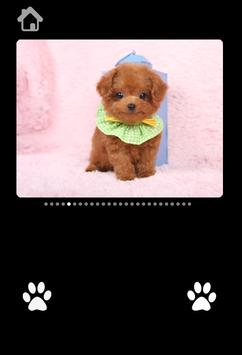 Cute Puppy Pictures For kids screenshot 5