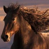 running horses wallpaper icon