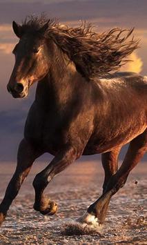 running horses wallpaper poster