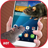 Mouse On Screen Scary Prank & Mouse in Phone Joke icon