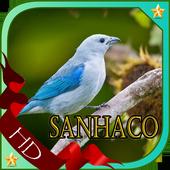 Cantos De Sanhaco Violino icon