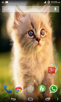 Cats Wallpapers screenshot 2