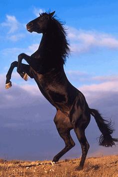 Horse Wallpaper screenshot 3