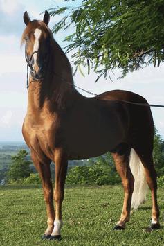 Horse Wallpaper screenshot 10