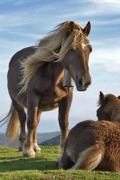 Horse Wallpaper screenshot 13