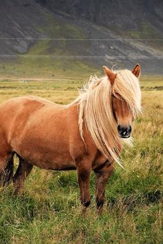 Horse Wallpaper screenshot 14