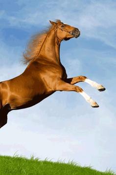 Horse Wallpaper screenshot 16