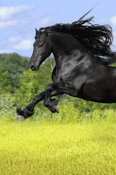 Horse Wallpaper screenshot 4