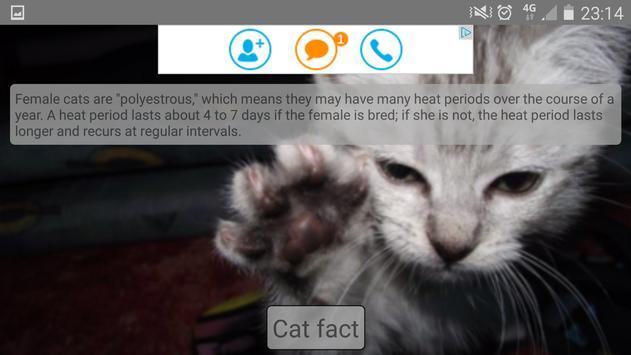 Random cat facts apk screenshot