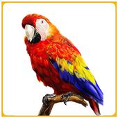 Bird Sounds & Ringtones Free icon