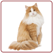 Cat Sounds & Ringtones Free icon