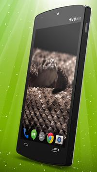 Rattlesnake Live Wallpaper apk screenshot