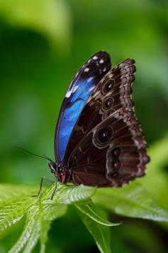 Butterfly HD Images poster