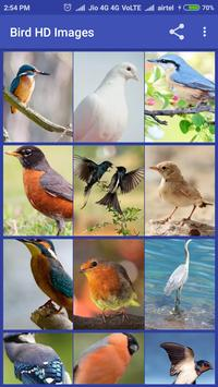Bird HD Images apk screenshot