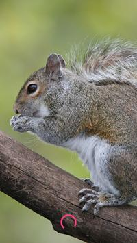 Squirrel HD Images poster