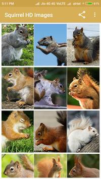 Squirrel HD Images apk screenshot
