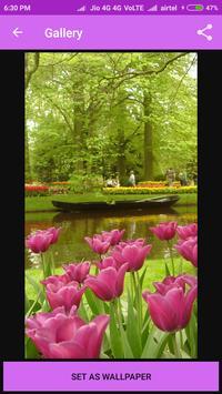 Tulip HD Images apk screenshot