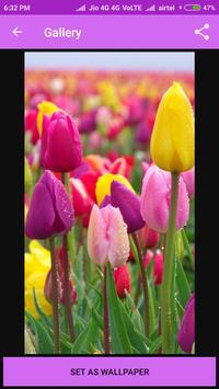 Tulip Wallpaper apk screenshot