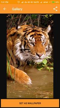 Tiger Wallpaper apk screenshot