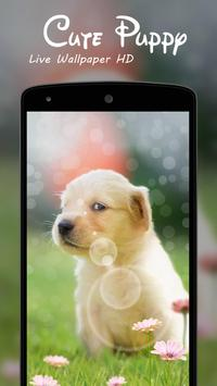 Cute Puppy Live Wallpaper HD poster