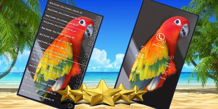 Red Factor Sun Conure Sounds poster