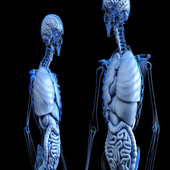 Human systems and organs icon
