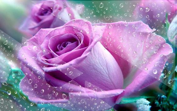 Purple Roses 2016 LWP apk screenshot