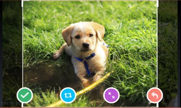 Adorable Pet Wallpaper screenshot 3