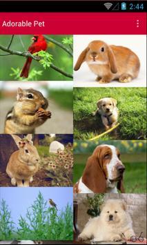 Adorable Pet Wallpaper poster
