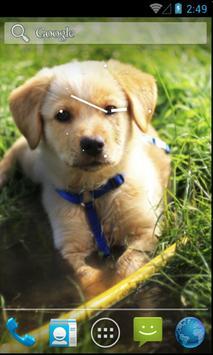 Adorable Pet Wallpaper screenshot 4